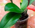 Geniální způsob jak správně zalévat Vaší orchidej – pokvete jako nikdy předtím!